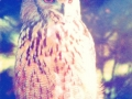 artowl